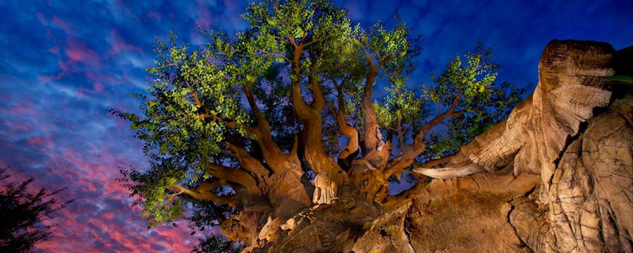 animal-kingdom-00-full